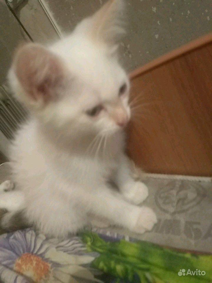 Котята 2 месяца отдадим бесплатно в добрые руки в Барнауле - фотография № 6