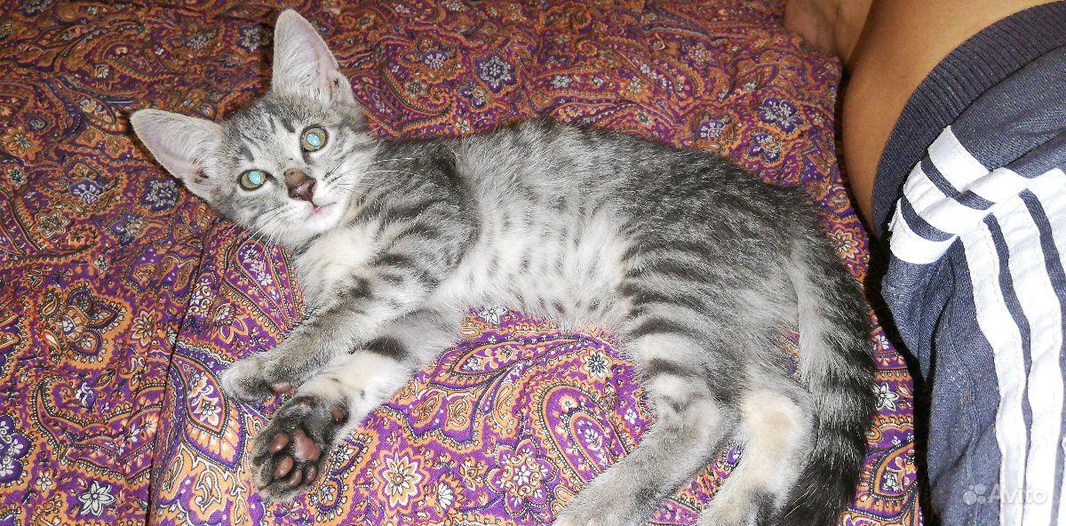 Котик ищет дом. Знает лоток, очень приличное живот