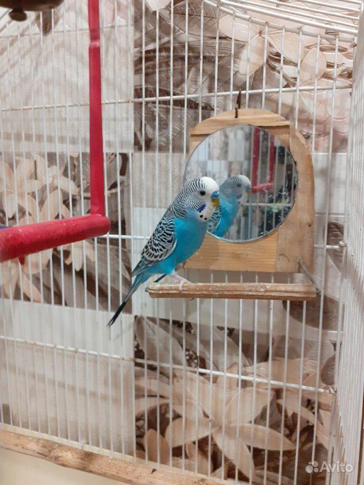Попугай купить на Зозу.ру - фотография № 1
