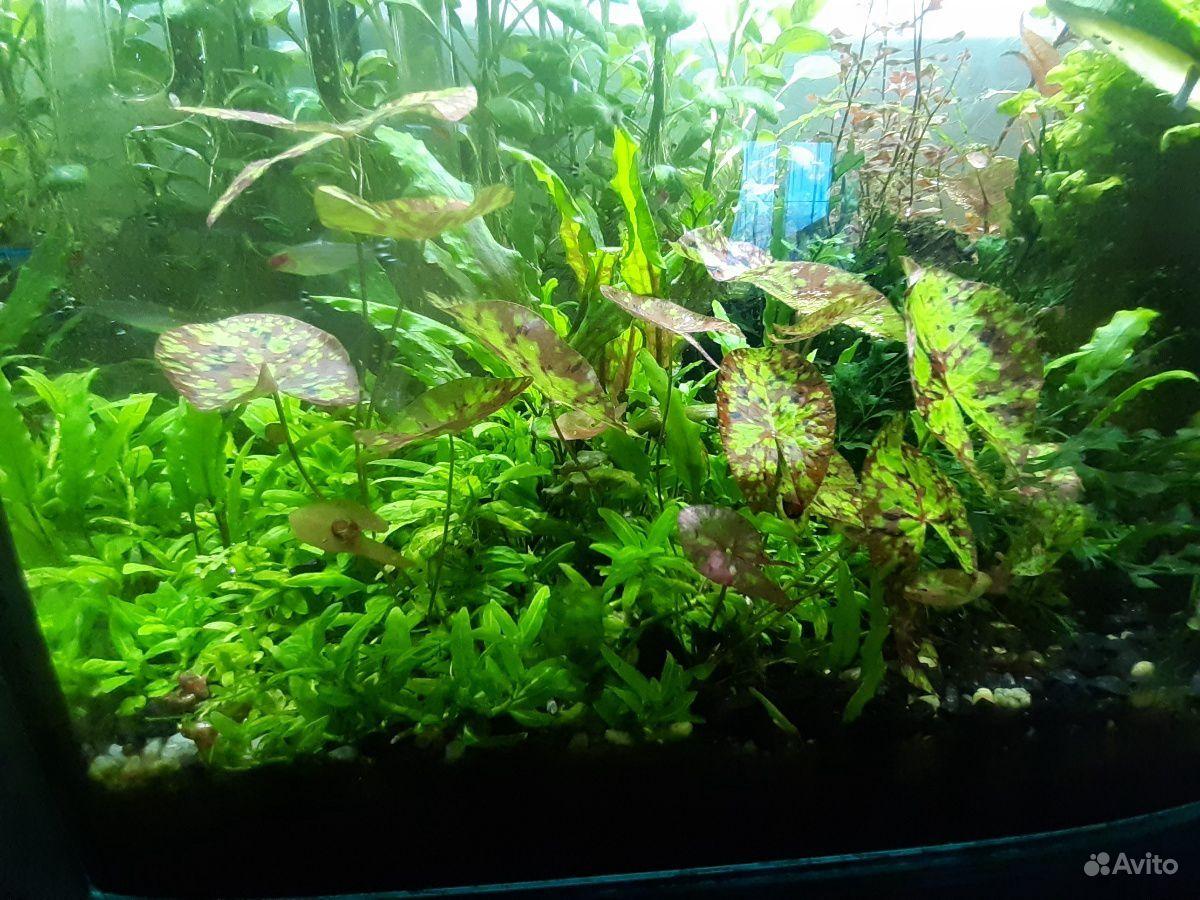 Растения для аквариума купить на Зозу.ру - фотография № 2
