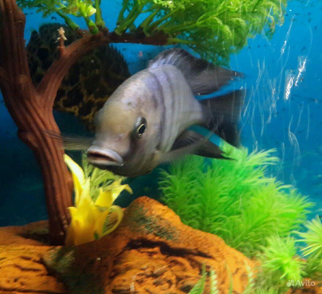 Голубой дельфин купить на Зозу.ру - фотография № 5