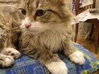 Экстра-пушистая кошка