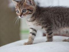 Котята тигрята в добрые руки
