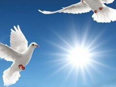 Белые голуби на торжество