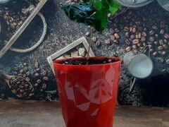 Кофейное дерево, кофе Арабика