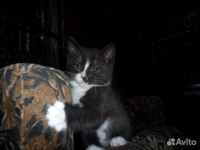 Добрые курск руки в авито котята