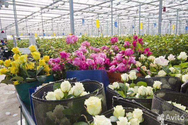 Цветы в волгограде оптом