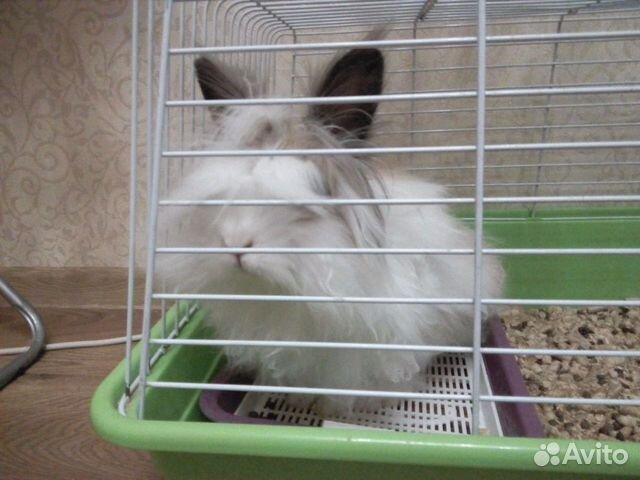 философии купить крольчат в петропавловске камчатском Спасибо автору!Для этих