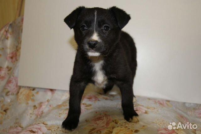 Собака купить на Зозу.ру - фотография № 8