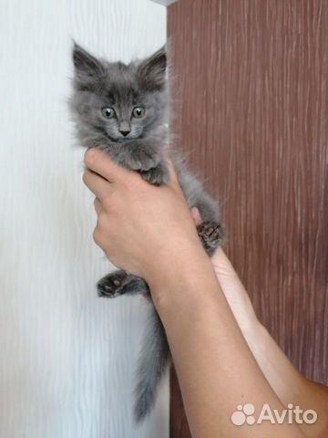 Отдам котенка девочка 89195613575 купить 3