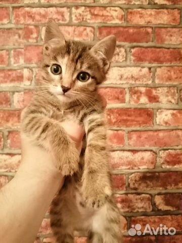 Отдам котят в добрые руки купить 1