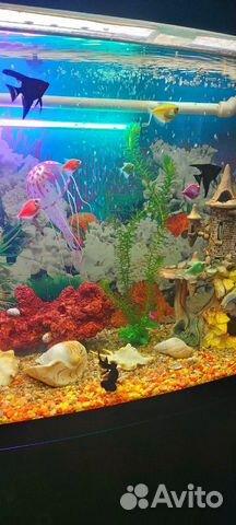 Коралл для аквариума купить 8
