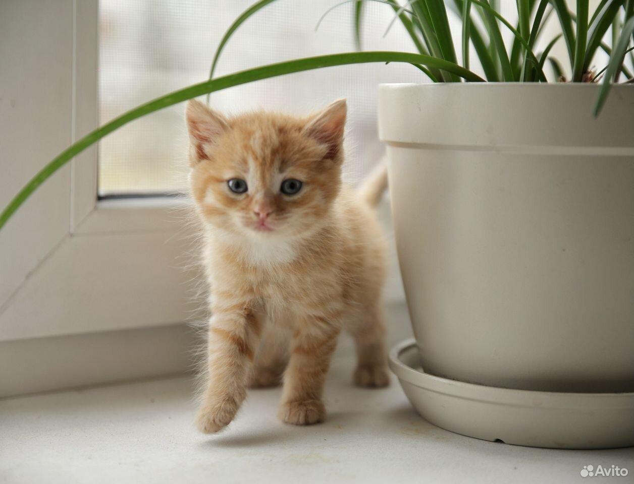 Отдам котят  89129770244 купить 3