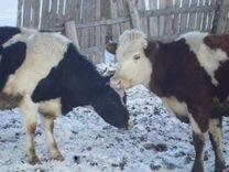 Корова теленок