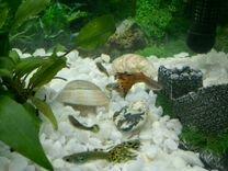 Рыбки гуппи и растения
