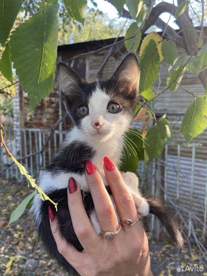 Кошечка в добрые руки  89877858679 купить 1