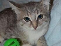 Мраморная, плюшевая девочка - котенок ищет дом