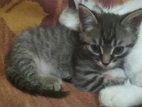 Отдам красивого котенка в хорошие руки
