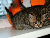 Котята тигрята с изумрудными глазами