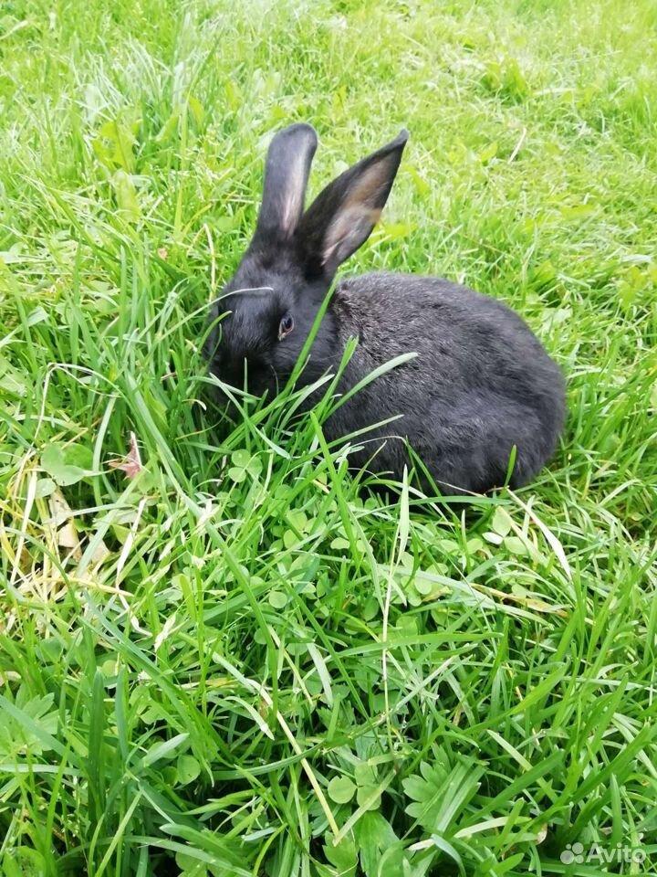Кролики  89997865033 купить 1