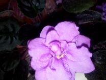 Цветы от 20