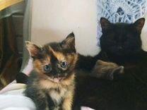 Котенок(кошечка) в добрые руки