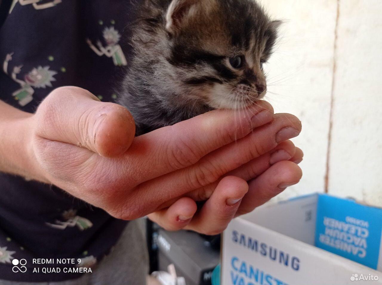 Котята в добрые руки  89055855983 купить 6